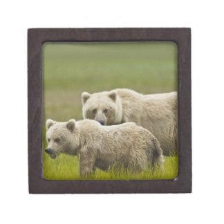 USA, Alaska, Lake Clark National Park. Mom and Jewelry Box