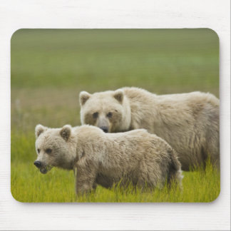 USA, Alaska, Lake Clark National Park. Mom and Mouse Pad