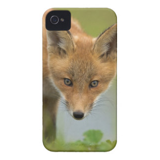 USA, Alaska, McNeil River. Red Fox. 4 iPhone 4 Cover