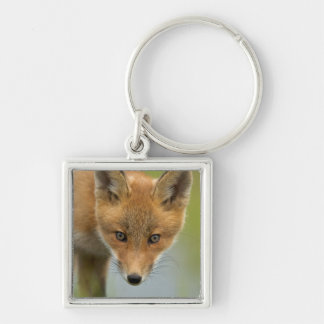 USA, Alaska, McNeil River. Red Fox. 4 Silver-Colored Square Keychain