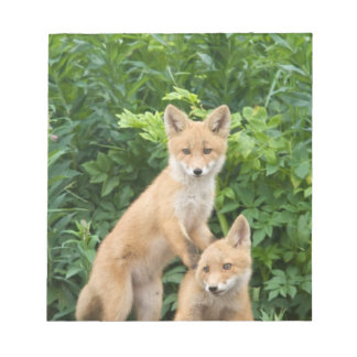 USA, Alaska, McNeil River. Red Fox. 5 Notepad