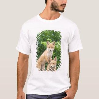 USA, Alaska, McNeil River. Red Fox. 5 T-Shirt
