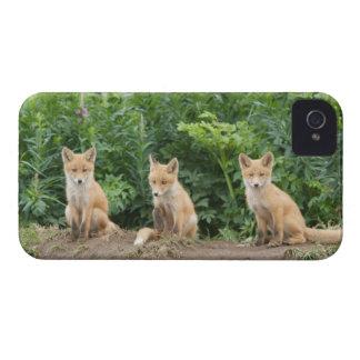 USA, Alaska, McNeil River. Red Fox. iPhone 4 Cover