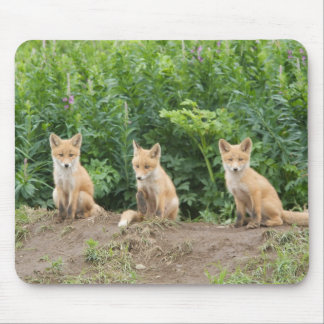 USA, Alaska, McNeil River. Red Fox. Mouse Pad