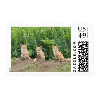 USA, Alaska, McNeil River. Red Fox. Postage