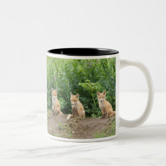 USA, Alaska, McNeil River. Red Fox. Two-Tone Coffee Mug