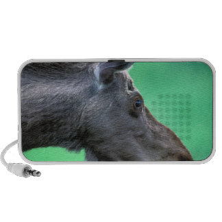 USA, Alaska, Moose Alces alces) munches on iPhone Speaker