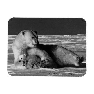 USA Alaska mother polar bear 1970 Rectangular Photo Magnet