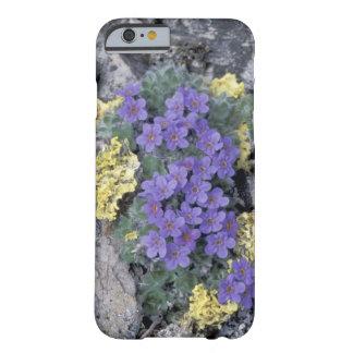 USA, Alaska National Wildlife Refuge (ANWR). 2 iPhone 6 Case