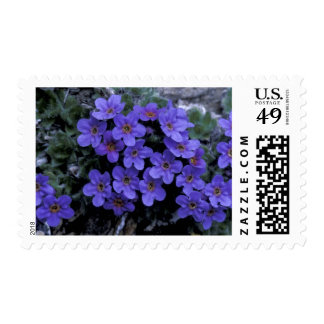 USA, Alaska National Wildlife Refuge (ANWR). Stamp