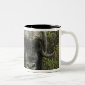 USA, Alaska, Nome. Close-up of musk ox Two-Tone Coffee Mug
