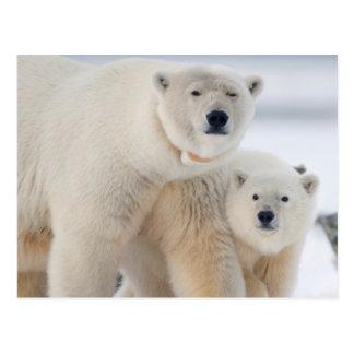 USA, Alaska, North Slope, 1002 Area 3 Postcard
