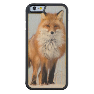 USA, Alaska, North Slope, 1002 Area Carved® Maple iPhone 6 Bumper