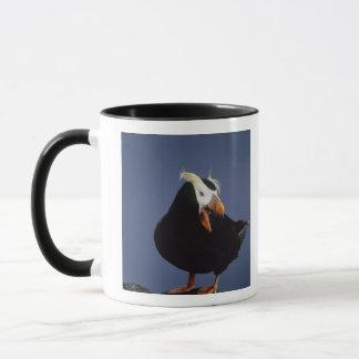 USA, Alaska, Pribilof Islands. Close-up of Mug