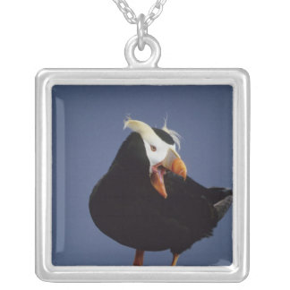 USA, Alaska, Pribilof Islands. Close-up of Jewelry