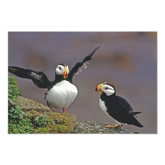 USA, Alaska, Pribilof Islands, St. George Photo Print