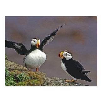 USA, Alaska, Pribilof Islands, St. George Postcard