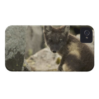 USA, Alaska, Pribilof Islands, St Paul. Blue 2 iPhone 4 Cases