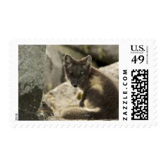 USA, Alaska, Pribilof Islands, St Paul. Blue 2 Stamp