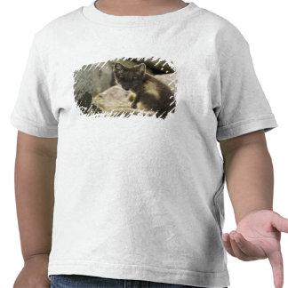 USA, Alaska, Pribilof Islands, St Paul. Blue 2 Tee Shirts