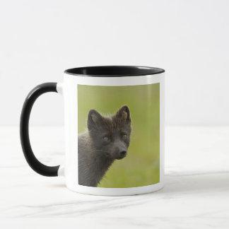 USA, Alaska, Pribilof Islands, St Paul. Blue 3 Mug