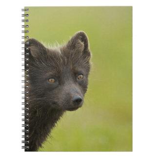USA, Alaska, Pribilof Islands, St Paul. Blue 3 Notebook