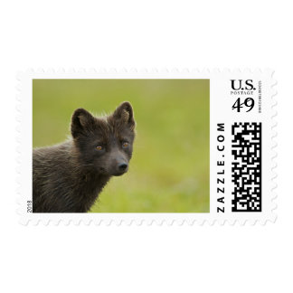 USA, Alaska, Pribilof Islands, St Paul. Blue 3 Postage