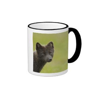 USA, Alaska, Pribilof Islands, St Paul. Blue 3 Ringer Mug