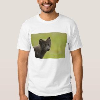 USA, Alaska, Pribilof Islands, St Paul. Blue 3 T-shirt