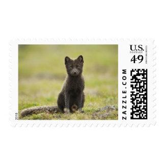 USA, Alaska, Pribilof Islands, St Paul. Blue 4 Postage Stamp