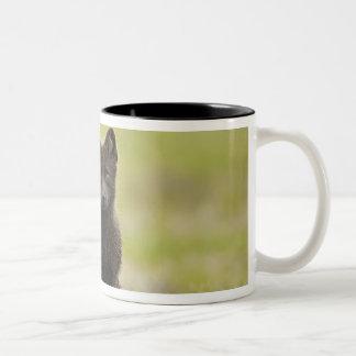 USA, Alaska, Pribilof Islands, St Paul. Blue 4 Two-Tone Coffee Mug