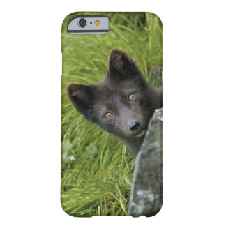 USA, Alaska, Pribilof Islands, St Paul. Blue Barely There iPhone 6 Case