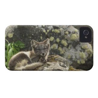 USA, Alaska, Pribilof Islands, St Paul. Blue iPhone 4 Case-Mate Case