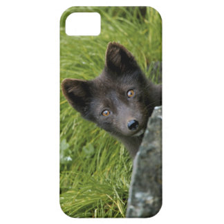 USA, Alaska, Pribilof Islands, St Paul. Blue iPhone SE/5/5s Case
