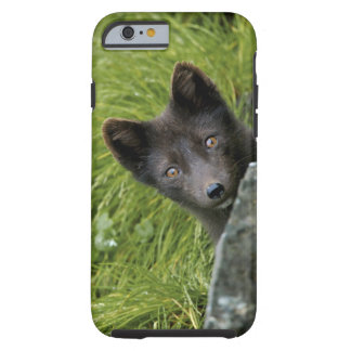 USA, Alaska, Pribilof Islands, St Paul. Blue Tough iPhone 6 Case