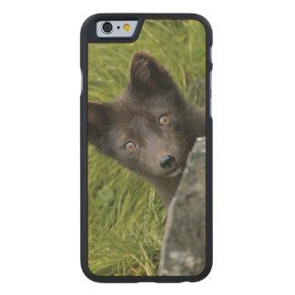 USA, Alaska, Pribilof Islands, St Paul. Blue Carved® Maple iPhone 6 Case