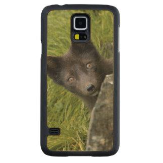 USA, Alaska, Pribilof Islands, St Paul. Blue Carved® Maple Galaxy S5 Case
