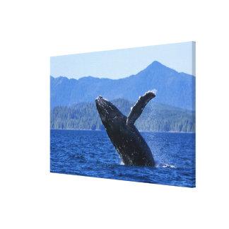 USA, Alaska, Prince of Wales Island. Humpback Canvas Print