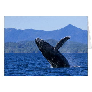 USA, Alaska, Prince of Wales Island. Humpback Card