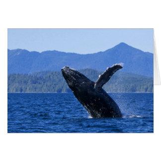 USA, Alaska, Prince of Wales Island. Humpback Card