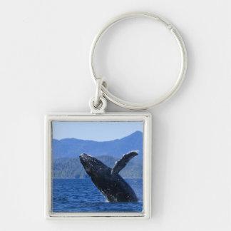 USA, Alaska, Prince of Wales Island. Humpback Silver-Colored Square Keychain