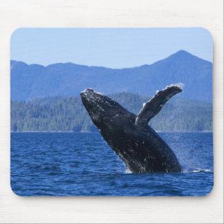 USA, Alaska, Prince of Wales Island. Humpback Mouse Pad