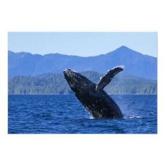 USA, Alaska, Prince of Wales Island. Humpback Photo Print