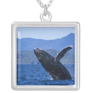 USA, Alaska, Prince of Wales Island. Humpback Square Pendant Necklace