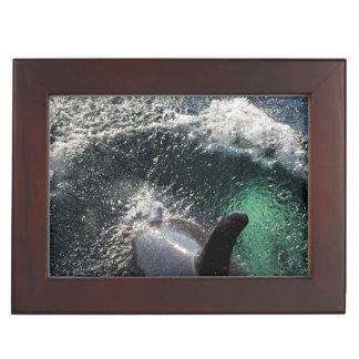 USA, Alaska, Tenakee Springs. Orca Keepsake Box