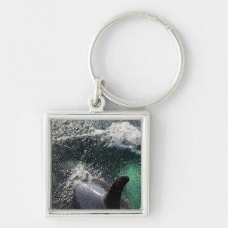 USA, Alaska, Tenakee Springs. Orca Keychain