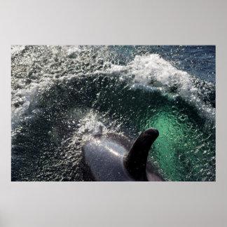 USA, Alaska, Tenakee Springs. Orca Poster