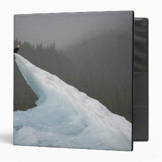 USA, Alaska, Tongass National Forest, Bald Vinyl Binders
