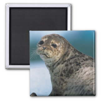 USA, Alaska, Tongass National Forest, Harbor 2 Inch Square Magnet