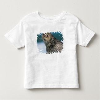 USA, Alaska, Tongass National Forest, Harbor Toddler T-shirt
